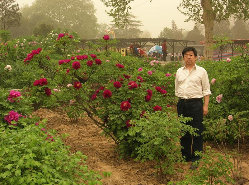 甘肃中川紫斑牡丹落户沈阳植物园